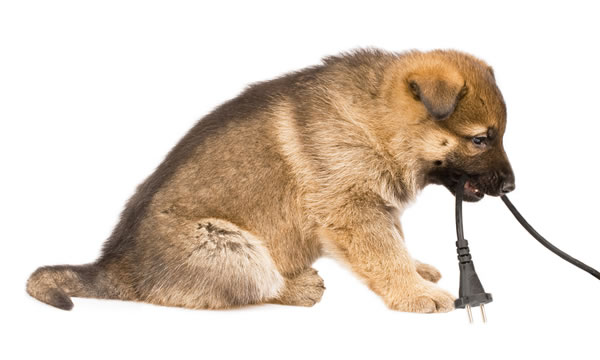 Keeping Pets Safe From Electrical Hazards In Your Home